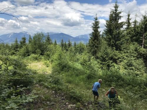 Razgled na Gorenjsko in nabiranje gozdnih sadežev tik pod vrhom Rovnika