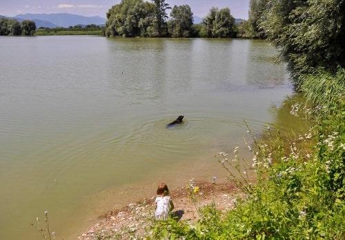 Osvežitev v ribniku Vrbje tudi za pse