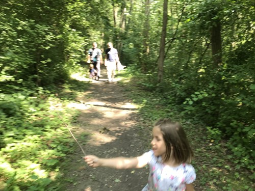 Po gozdni poti med potjo ob ribniku in Savinjo