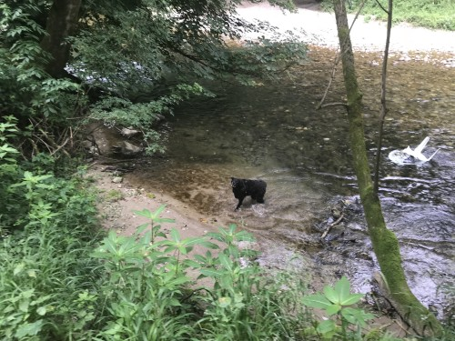 Pasja radost v reki Kokri