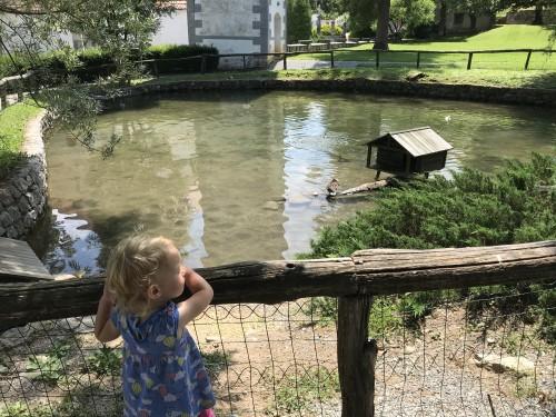 Opazovanje račk v ribniku v grajskem parku v Polhovem Gradcu
