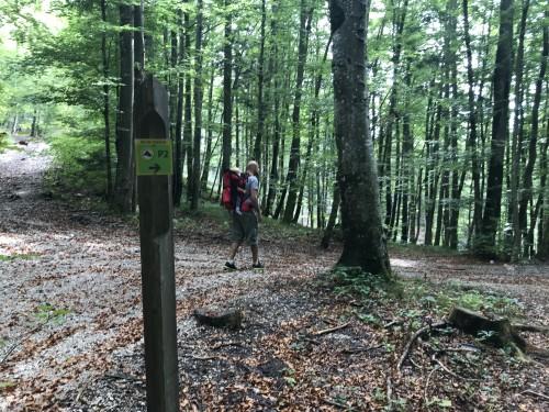 Oznaka P2 Pot pod storžičem nas vodi na gozdno stezico