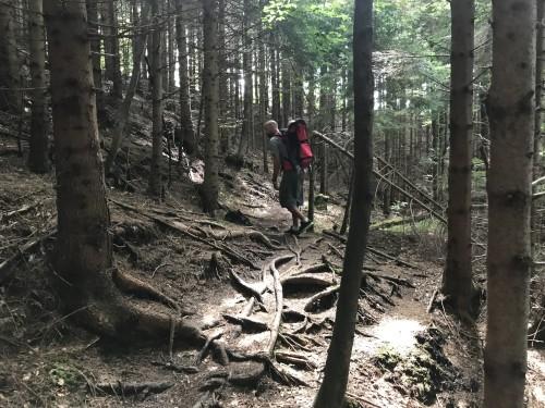 Pot vas vodi čez čudovit smrekov gozd (Pot pod storžičem)