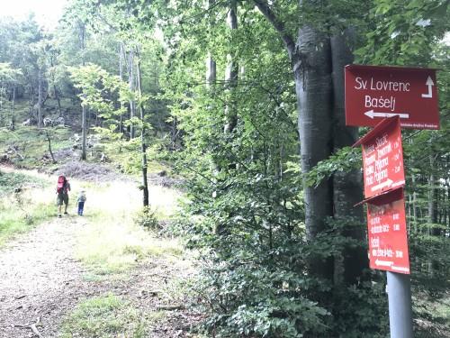 Sledite oznakam za sv. Lovrenc in se povzpnite v hrib (pot pod storžičem)