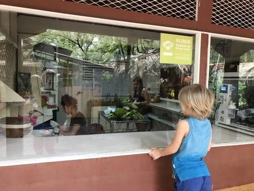 Ogled klinike za rešene živali, Jaguar rescue center, Kostarika