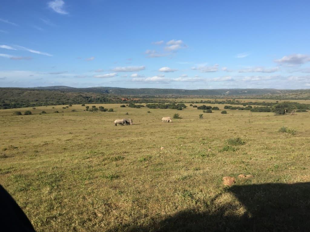 Amakhala Game Reserve, nosorogi