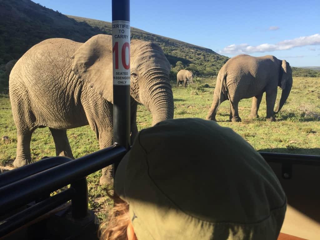 Južna Afrika je odlična destinacija za prvi safari z otroki, Amakhala Game Reserve
