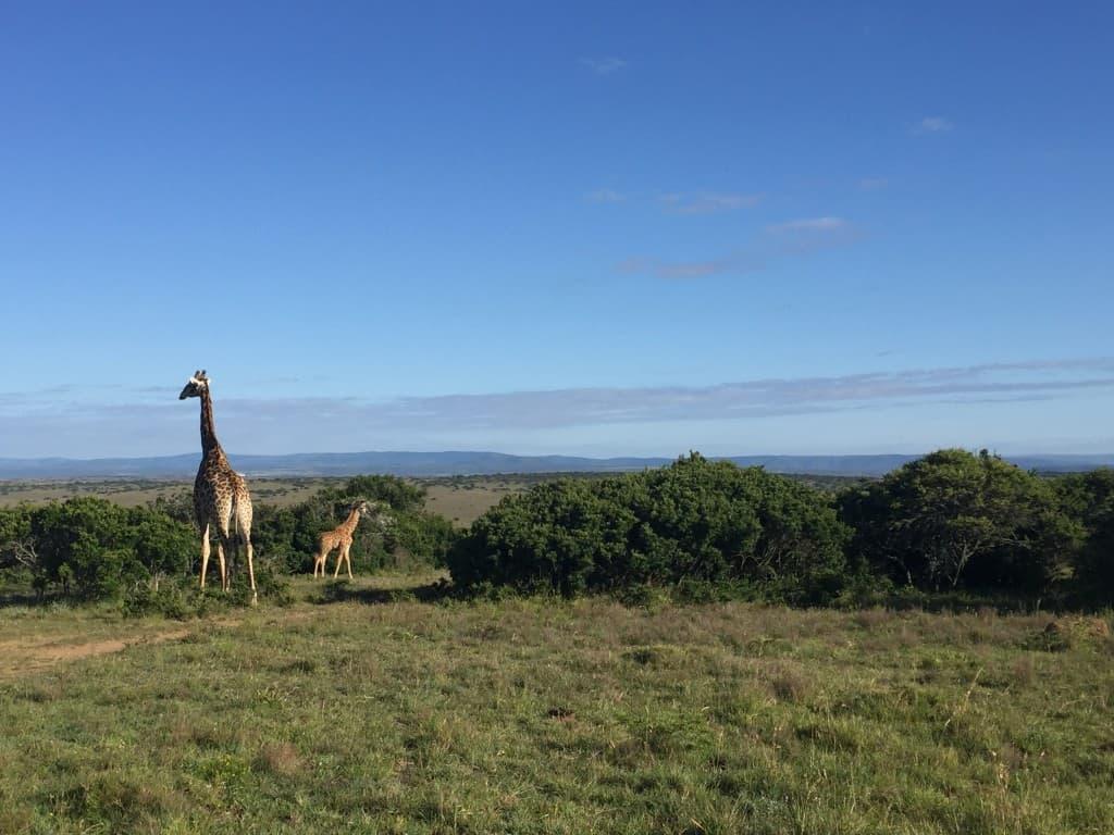 Za pravo doživetje safarija si vzemite vsaj 3 dni