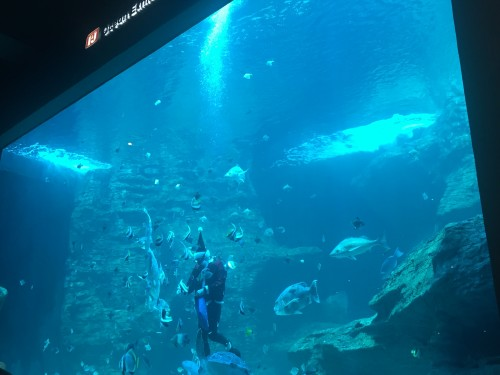 Hranjenje rib v velikem akvariju, Two Oceans Ocenarium, Cape Town