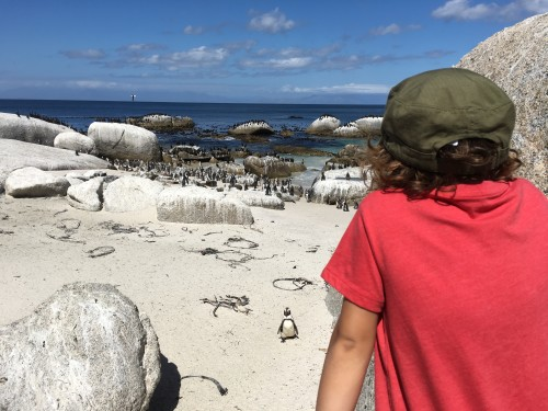 Boulders Beach in kolonija pingvinov, Cape Town