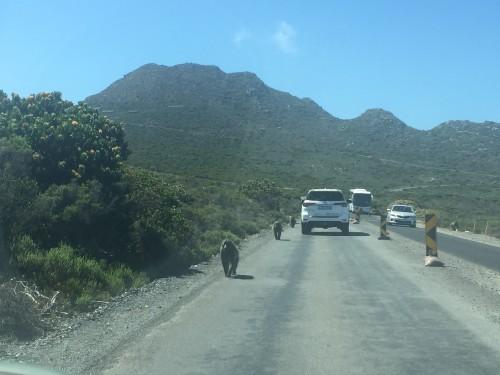 Gaboni na poti, Cape Peninsula
