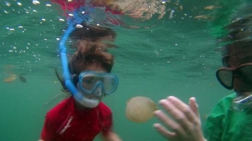Nepekoče meduze na otoku Kakaban
